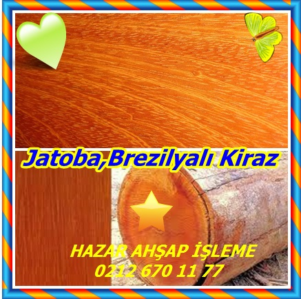 catsJatoba,Brezilyalı Kiraz54332