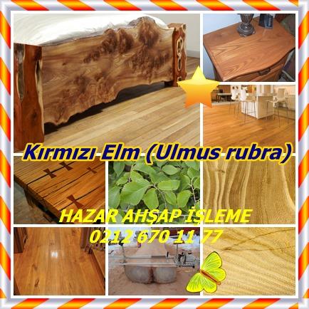 catsKırmızı Elm (Ulmus rubra)222