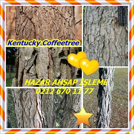 catsKentucky Coffeetree,(Gymnocladus dioicus)11