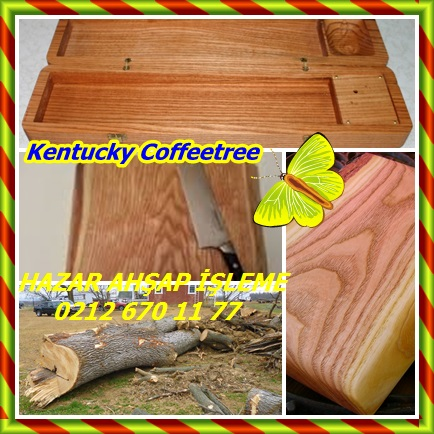 catsKentucky Coffeetree,(Gymnocladus dioicus)5654