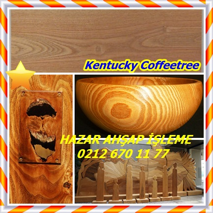 catsKentucky Coffeetree,(Gymnocladus dioicus)777