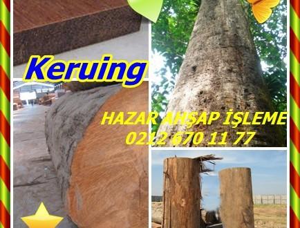 Keruing, Apitong, (Dipterocarpus spp.),chhoeuteal (KH), nhang (LA), (NL), yang hin, yang na (TH) keroewing, (VN) uzun dzao.