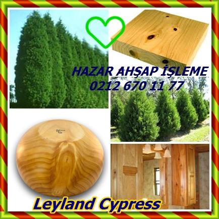 catsLeyland Cypressıu