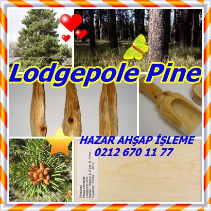 catsLodgepole Pine1