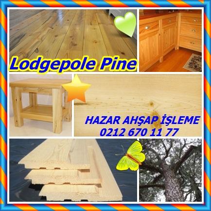 catsLodgepole Pine12