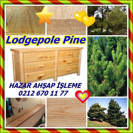 catsLodgepole Pine323