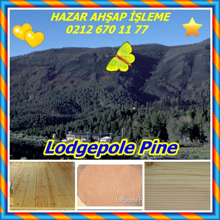 catsLodgepole Pine443