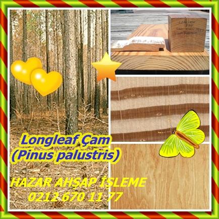 catsLongleaf Çam (Pinus palustris)