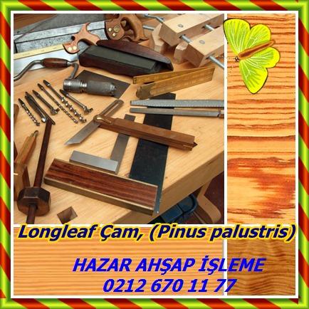 catsLongleaf Çam, (Pinus palustris)556464