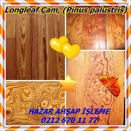 catsLongleaf Çam, (Pinus palustris)85