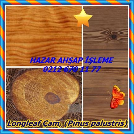 catsLongleaf Çam, (Pinus palustris)868