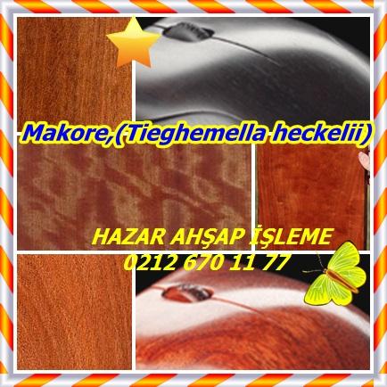 catsMakore,(Tieghemella heckelii)456733
