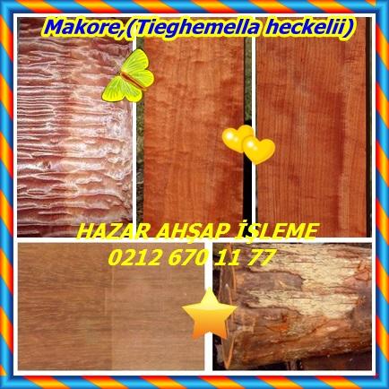 catsMakore,(Tieghemella heckelii)56535353