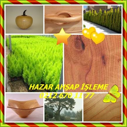 catsMonterey Cypress,(Cupressus macrocarpa90