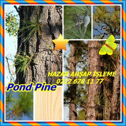 catsPond Pine11