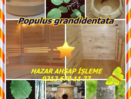 "Bigtooth Aspen,( Populus grandidentata),Kavak ,tremulus , ""sallama, titreme, titreyerek"", Titreme Aspen, dahil Peuplier sahte-titremeye (Qué), Asp (İsveç), OSP (Is), Critheann(Gal), Amerikanische ESPE (Alm)"