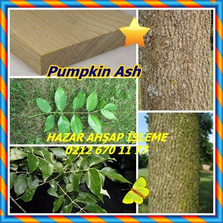 catsPumpkin Ash545