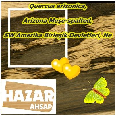catsQuercus arizonica, (2)