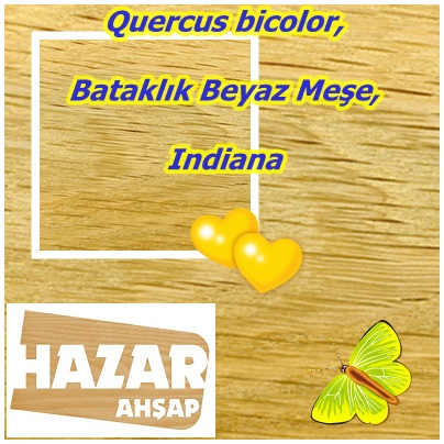 catsQuercus bicolor,