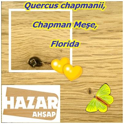 catsQuercus chapmanii,