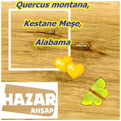 catsQuercus montana,