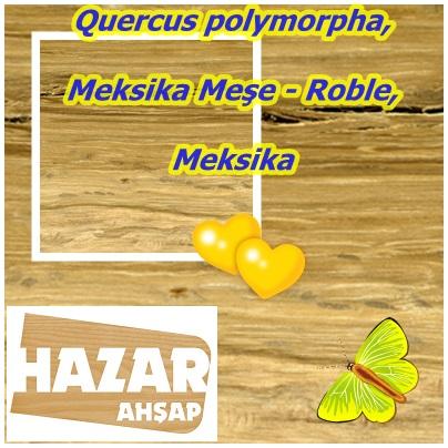 catsQuercus polymorpha,