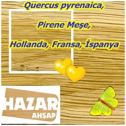 catsQuercus pyrenaica,