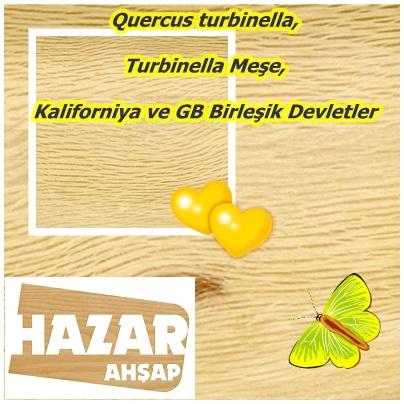 catsQuercus turbinella,