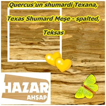 catsQuercus'un shumardi Texana,