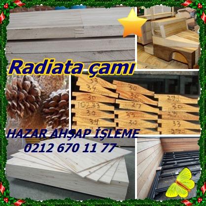 catsRadiata çamı7