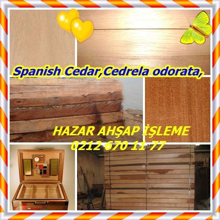 catsSpanish Cedar,Cedrela odorata,2