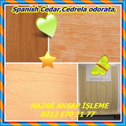 catsSpanish Cedar,Cedrela odorata,3232
