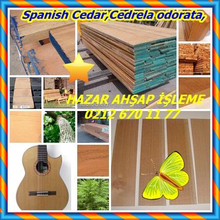 catsSpanish Cedar,Cedrela odorata,33