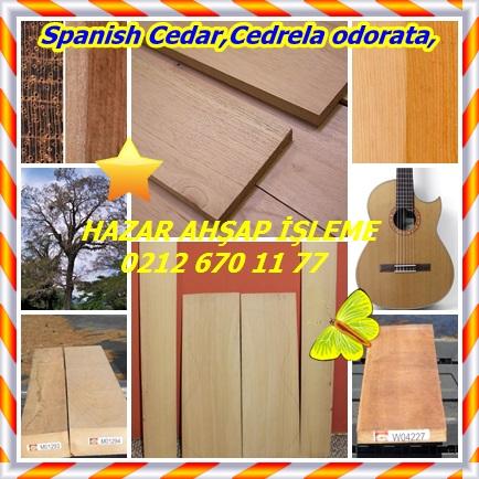 catsSpanish Cedar,Cedrela odorata,654
