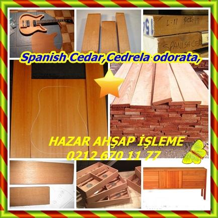 catsSpanish Cedar,Cedrela odorata,88778