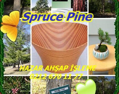 Spruce Pine,Cedar Pine, Walter Pine, Walter'ın Pine,(Pinus glabra), alt beyaz çam, sedir çam, ladin çam ova, çam, çam yoksul güney beyaz çam, güney sarı çam, ladin çam ova, ladin çam, Walter çam, beyaz çam