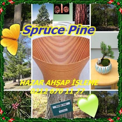 catsSpruce Pine