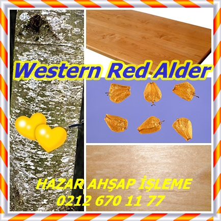 catsWestern Red Alder