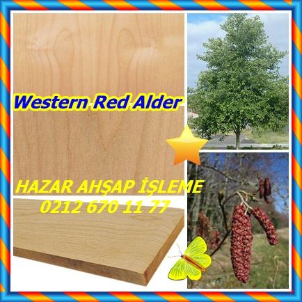 catsWestern Red Alder112