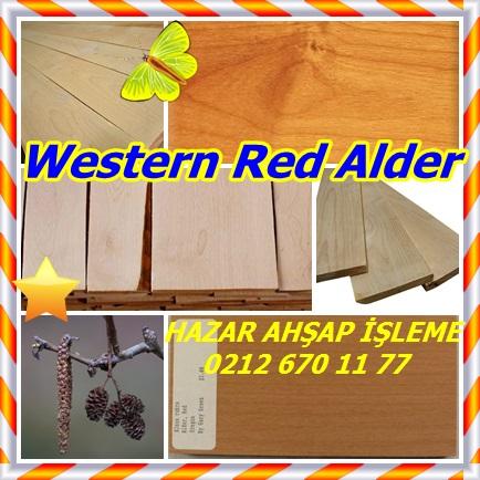 catsWestern Red Alder233