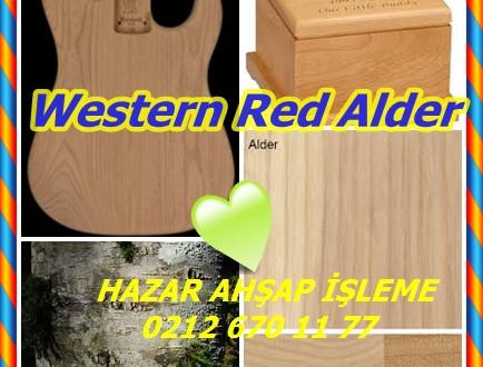 Western Red Alder,Alder kırmızı ,(Alnus rubra),Kırmızı Alder, Oregon Alder,Oregon kızılağaç, batı kızılağaç, Pasifik sahil kızılağaç