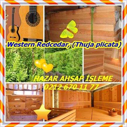 catsWestern Redcedar, (Thuja plicata)22