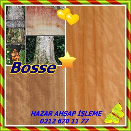catscatsbosse123