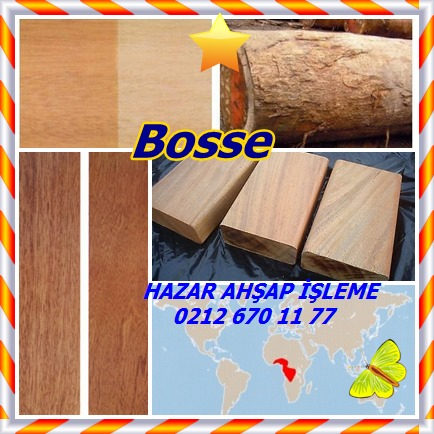 catscatsbosse577