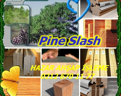 Slash Çam (Pinus ELLIOTTII),Çam, sarı çam çizgi, bataklık çam Slash.Honduras çam, sarı çam çizgi, bataklık çam, çıralı çam çizgi, çam Slash.