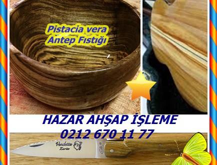Pistacia vera ,Antep Fıstığı,(Pistacia vera)