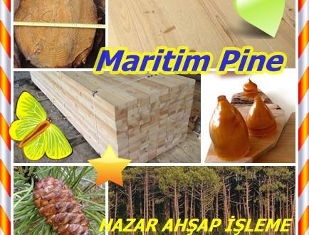 Yalı çamı ,Maritime Pine ,(Pinus pinaster),deniz çam ,küme çam,Avrupa terebentin ,Mauritius çam ,pinaster ,sahil çam ,yıldız çam