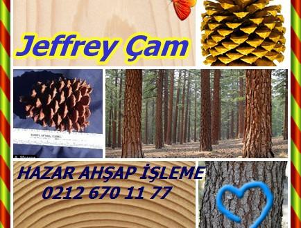 Jeffrey Çam,Jeffrey boğa, batı, siyah, Truckee veya diri odun çam