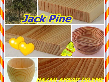 Jack Pine,Doğu jack,(Pinus banksiana) Gri, Siyah, Black jack, Scrub, Prens'in çam veya Banksiana çam veya Pin gris.