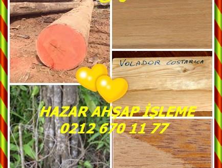 Araracanga, Volador,(Aspidosperma megalocarpon),Araracanga, Volador,Alcarreto, Malerio-colorado, Peroba Rosa, Pelmax
